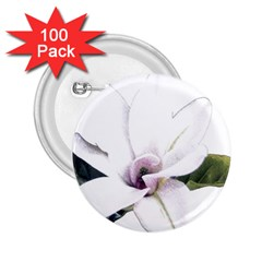 White Magnolia pencil drawing art 2.25  Buttons (100 pack)