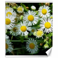 White Summer Flowers Oil Painting Art Canvas 8  X 10