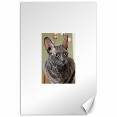 Cornish Rex, Blue Canvas 24  x 36