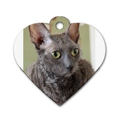 Cornish Rex, Blue Dog Tag Heart (Two Sides)