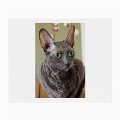 Cornish Rex, Blue Small Glasses Cloth (2-Side)