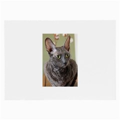 Cornish Rex, Blue Large Glasses Cloth