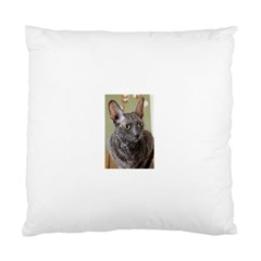Cornish Rex, Blue Standard Cushion Case (One Side)