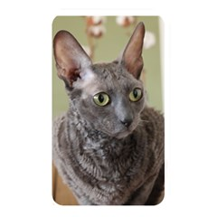 Cornish Rex, Blue Memory Card Reader