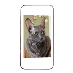 Cornish Rex, Blue Apple iPhone 4/4s Seamless Case (Black)