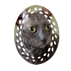 Cornish Rex, Blue Ornament (Oval Filigree)