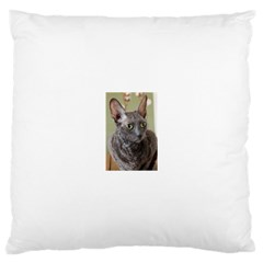 Cornish Rex, Blue Large Cushion Case (Two Sides)