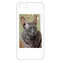 Cornish Rex, Blue Apple iPhone 5 Seamless Case (White)