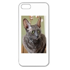 Cornish Rex, Blue Apple Seamless iPhone 5 Case (Clear)