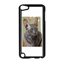 Cornish Rex, Blue Apple iPod Touch 5 Case (Black)