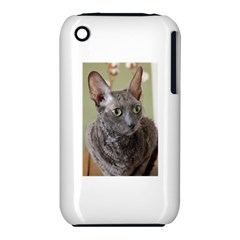 Cornish Rex, Blue Apple iPhone 3G/3GS Hardshell Case (PC+Silicone)