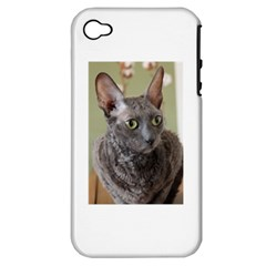 Cornish Rex, Blue Apple iPhone 4/4S Hardshell Case (PC+Silicone)