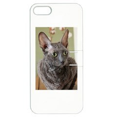 Cornish Rex, Blue Apple iPhone 5 Hardshell Case with Stand