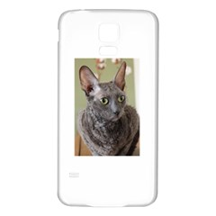 Cornish Rex, Blue Samsung Galaxy S5 Back Case (White)