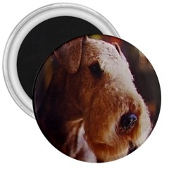 Airedale Terrier 3  Magnets