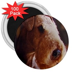Airedale Terrier 3  Magnets (100 pack)