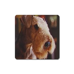 Airedale Terrier Square Magnet