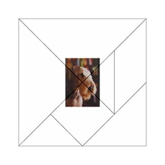Airedale Terrier Acrylic Tangram Puzzle (6  x 6 )