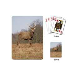Red Deer Stag on a Hill Playing Cards (Mini)