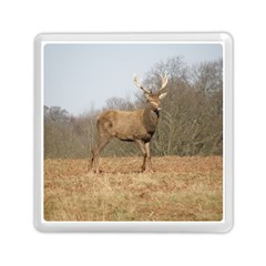 Red Deer Stag on a Hill Memory Card Reader (Square)