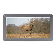 Red Deer Stag on a Hill Memory Card Reader (Mini)