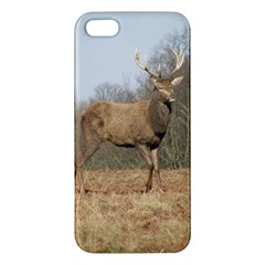 Red Deer Stag on a Hill Apple iPhone 5 Premium Hardshell Case