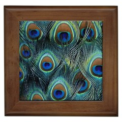 Feathers Art Peacock Sheets Patterns Framed Tiles