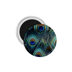 Feathers Art Peacock Sheets Patterns 1.75  Magnets