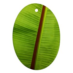 Ensete Leaf Oval Ornament (two Sides)