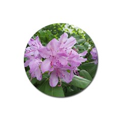 Purple Rhododendron Flower Magnet 3  (round)