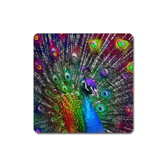 3d Peacock Pattern Square Magnet