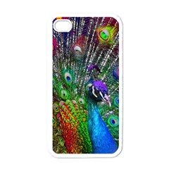 3d Peacock Pattern Apple iPhone 4 Case (White)