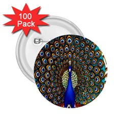 The Peacock Pattern 2.25  Buttons (100 pack)