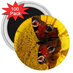 Yellow Butterfly Insect Closeup 3  Magnets (100 pack)