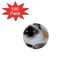 Birman second 1  Mini Magnets (100 pack)