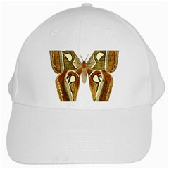 Butterfly Animal Insect  White Cap