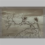 Vultures At Top Of Leaveless Tree Canvas 18  x 12  18  x 12  x 0.875  Stretched Canvas