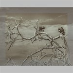 Vultures At Top Of Leaveless Tree Deluxe Canvas 16  x 12   16  x 12  x 1.5  Stretched Canvas