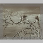 Vultures At Top Of Leaveless Tree Deluxe Canvas 20  x 16   20  x 16  x 1.5  Stretched Canvas