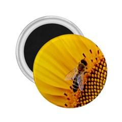Sun Flower Bees Summer Garden 2.25  Magnets