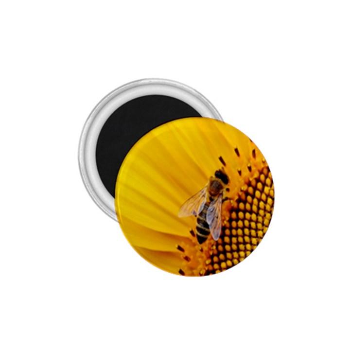 Sun Flower Bees Summer Garden 1.75  Magnets