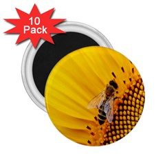 Sun Flower Bees Summer Garden 2.25  Magnets (10 pack)
