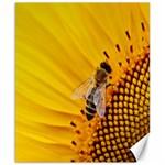Sun Flower Bees Summer Garden Canvas 8  x 10  10.02 x8 Canvas - 1