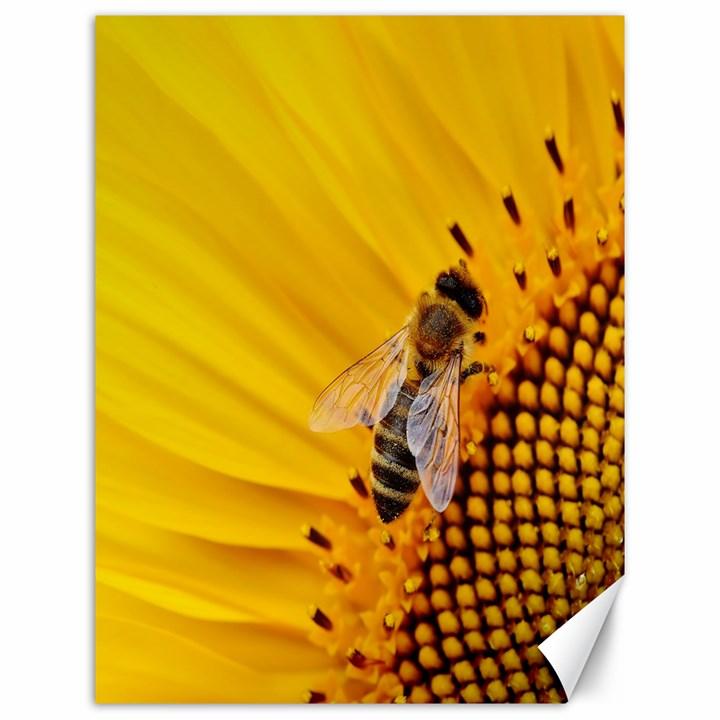 Sun Flower Bees Summer Garden Canvas 12  x 16