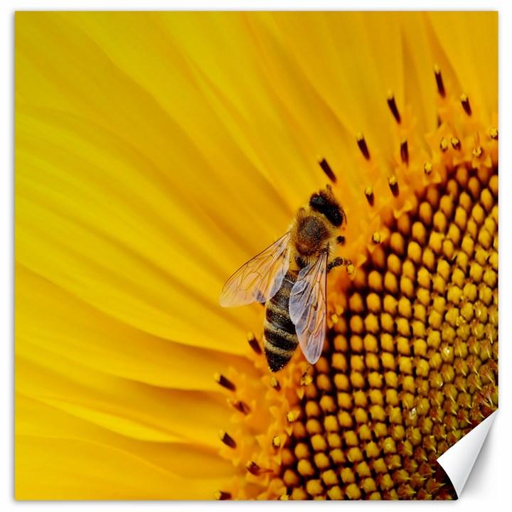 Sun Flower Bees Summer Garden Canvas 20  x 20