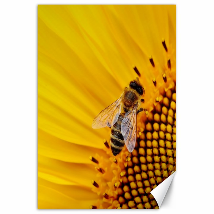Sun Flower Bees Summer Garden Canvas 20  x 30