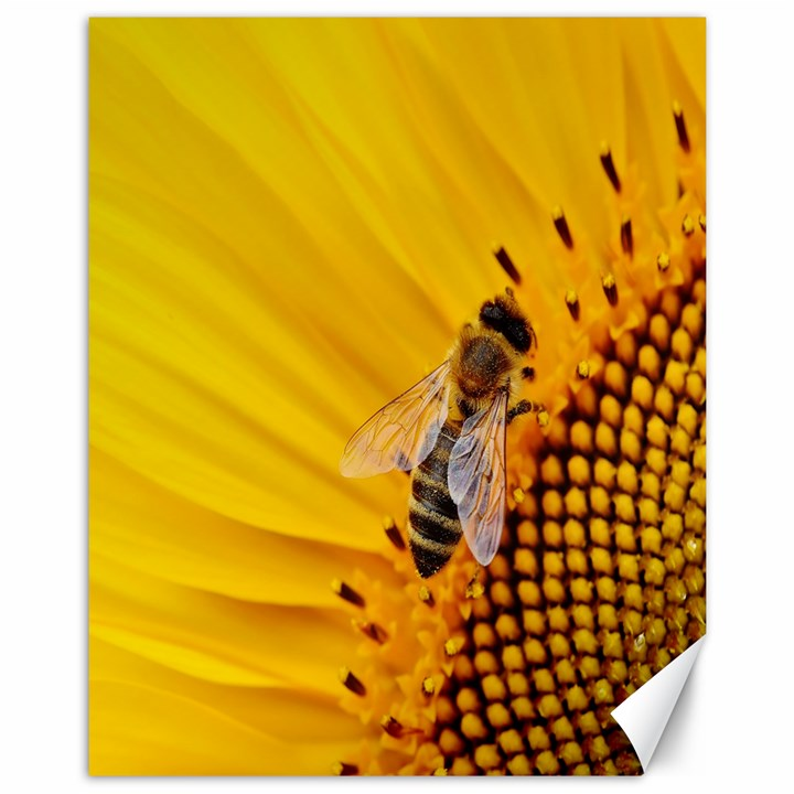 Sun Flower Bees Summer Garden Canvas 11  x 14