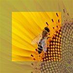 Sun Flower Bees Summer Garden Mini Canvas 4  x 4  4  x 4  x 0.875  Stretched Canvas