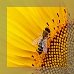 Sun Flower Bees Summer Garden Mini Canvas 8  x 8  8  x 8  x 0.875  Stretched Canvas