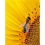 Sun Flower Bees Summer Garden Large Memo Pads 4.125 x5.5  Memopad